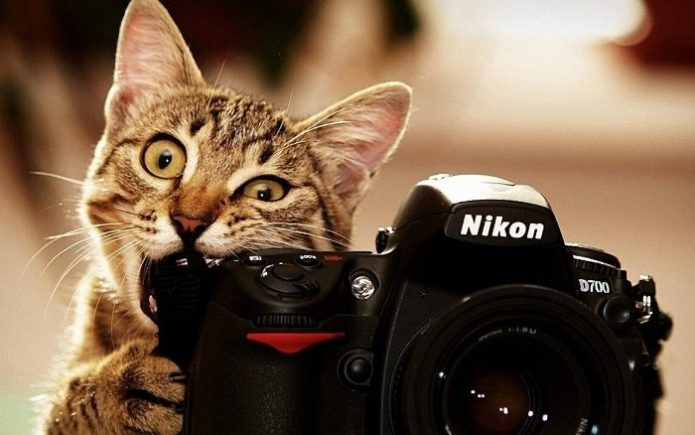 Полосатый кот с фотоаппаратом Nikon в лапах