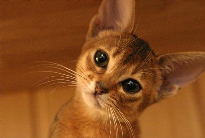 Очаровательный котёнок крупным планом