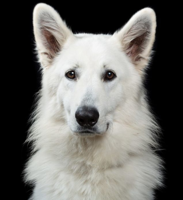 Портретные фото собак