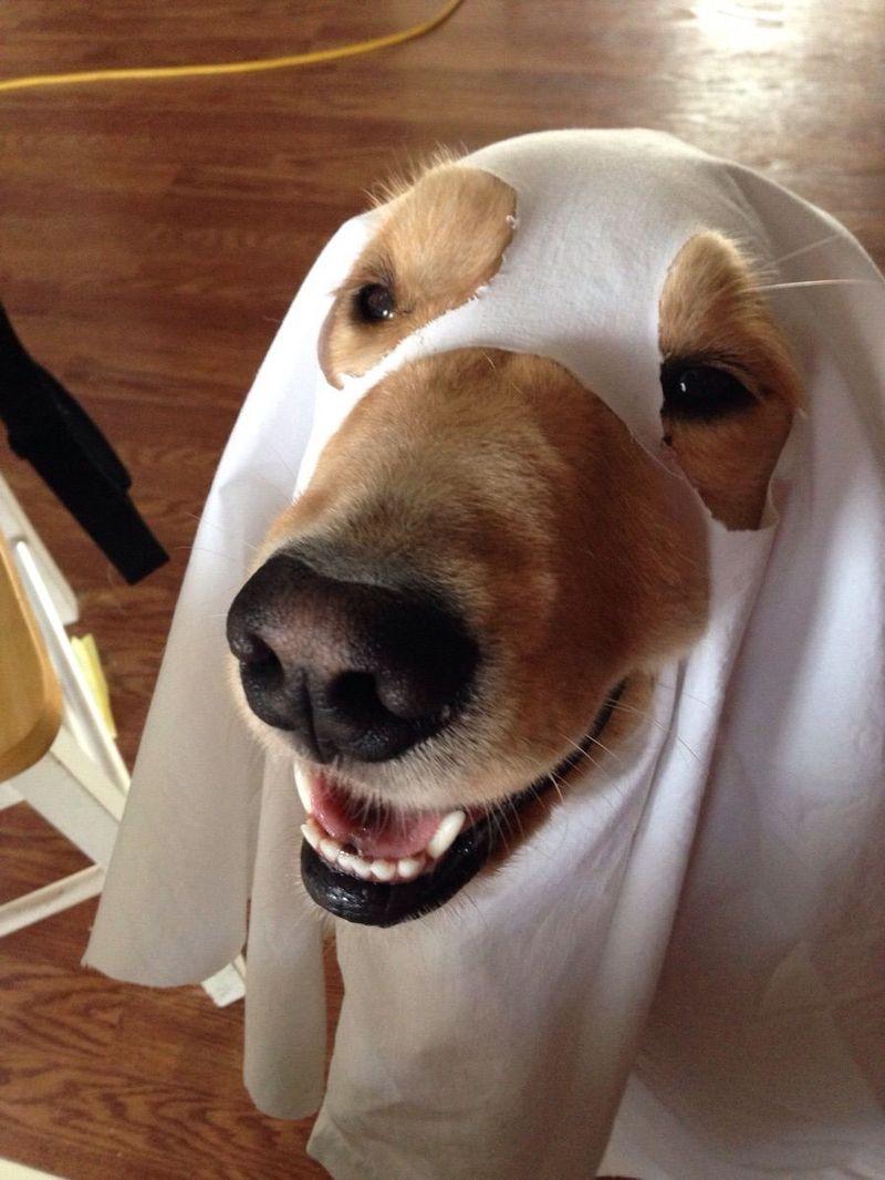 Смешные очень смешные картинки про собак, картинки животным