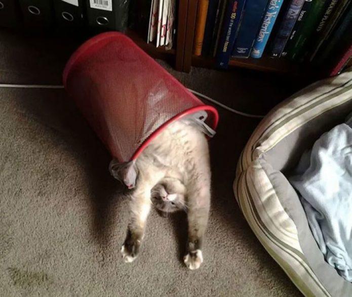 неестественные позы сна кошек