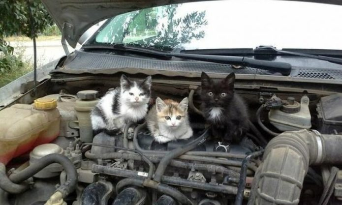 животные под капотом