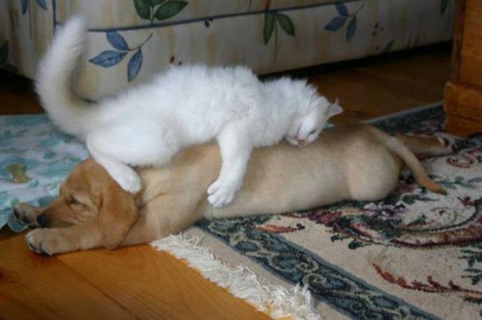 собаки которые уснули в необычных местах