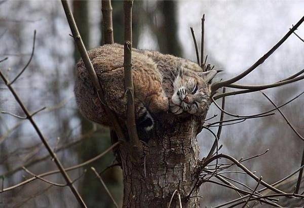 необычные места кошек для сна