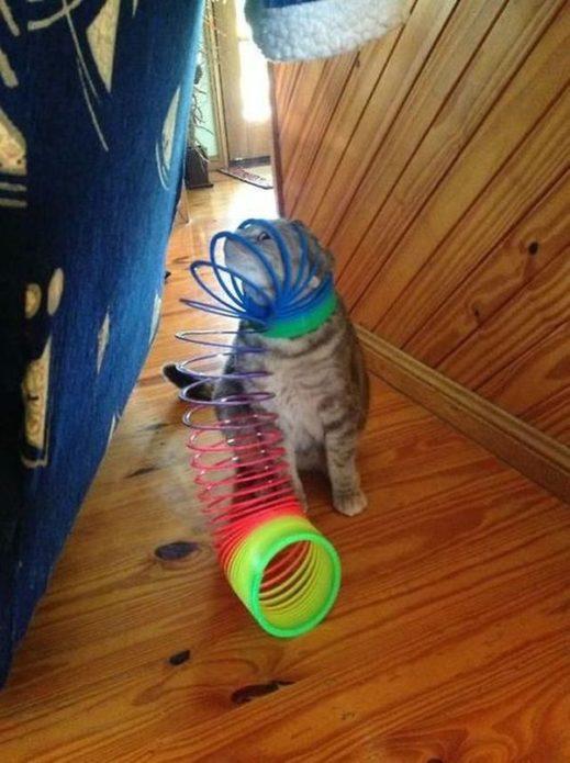 кошка застряла в пружинке