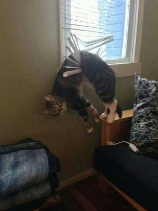 кошка застряла в жалюзи