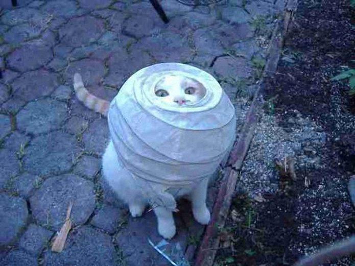 кошачьи фейлы