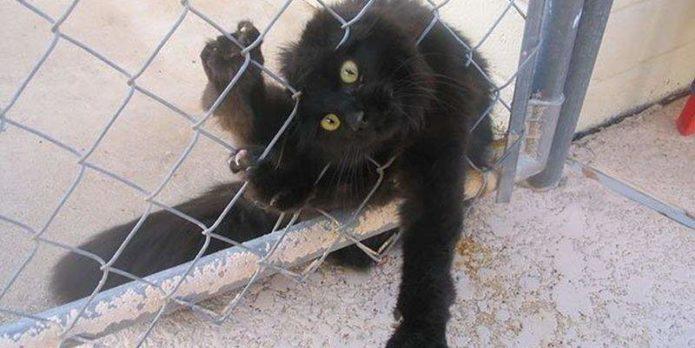 Кошка застряла в решетке