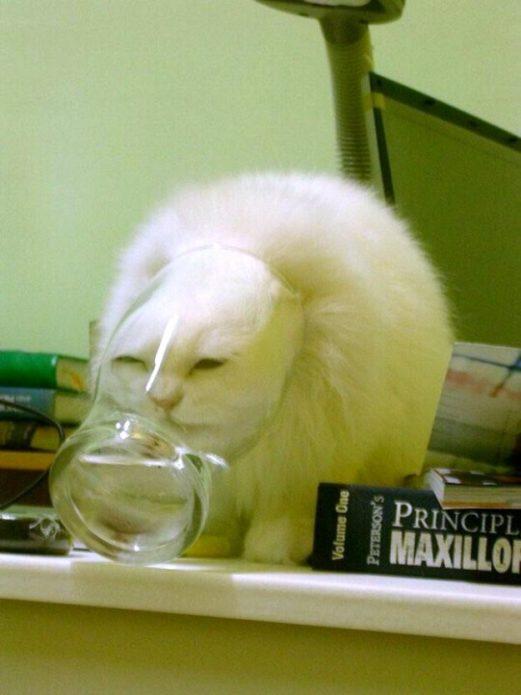 Кошка застряла в стакане