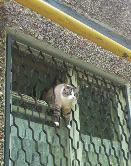 кошка застряла в решетке окна