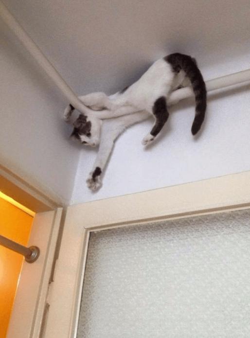 Кошка застряла в углу