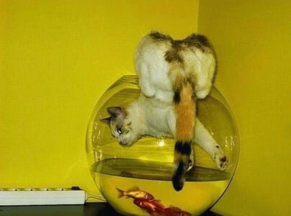 кошка в аквариуме