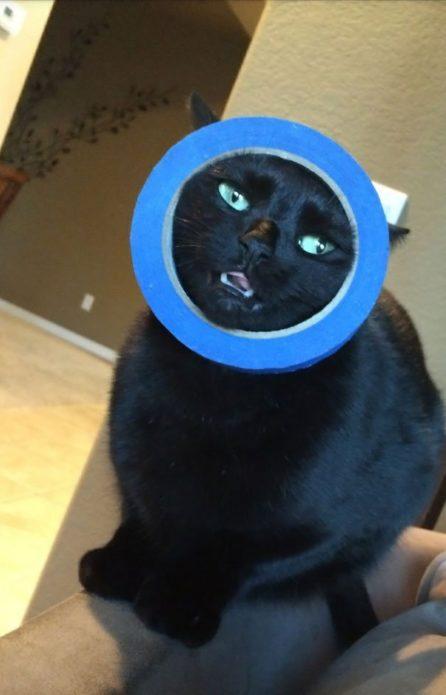 Кошка застряла в изоленте