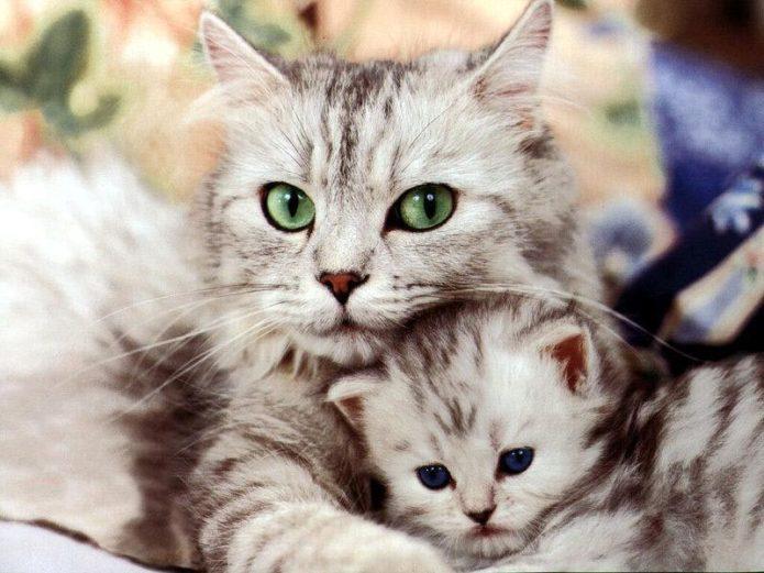 котёнок мурлыкает
