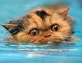 Почему кошки боятся воды — как приучить