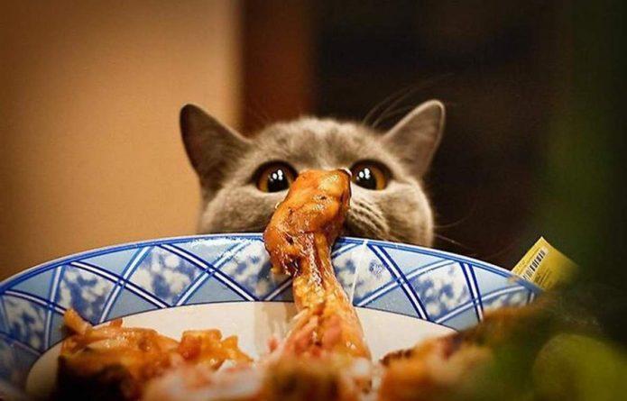 кот лезет в тарелку