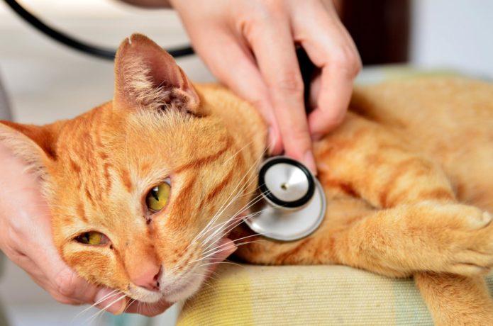 Рыжий кот у ветеринара