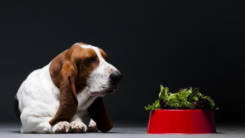 Какие овощи можно давать собакам