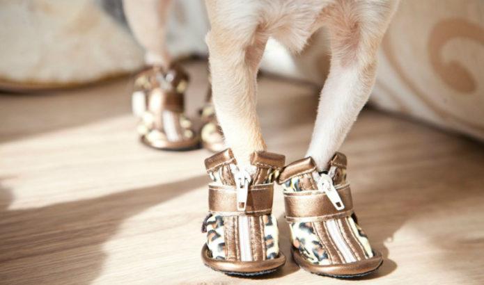Собачьи лапки в обуви