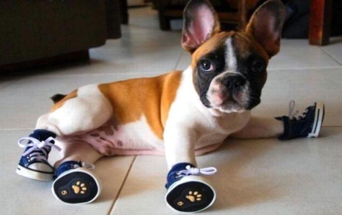 щенок в ботинках