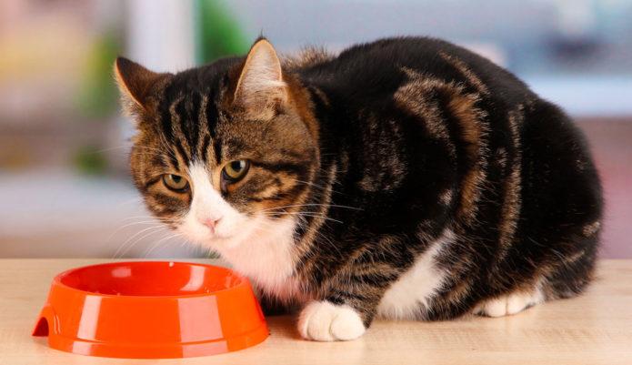 кошка не ест