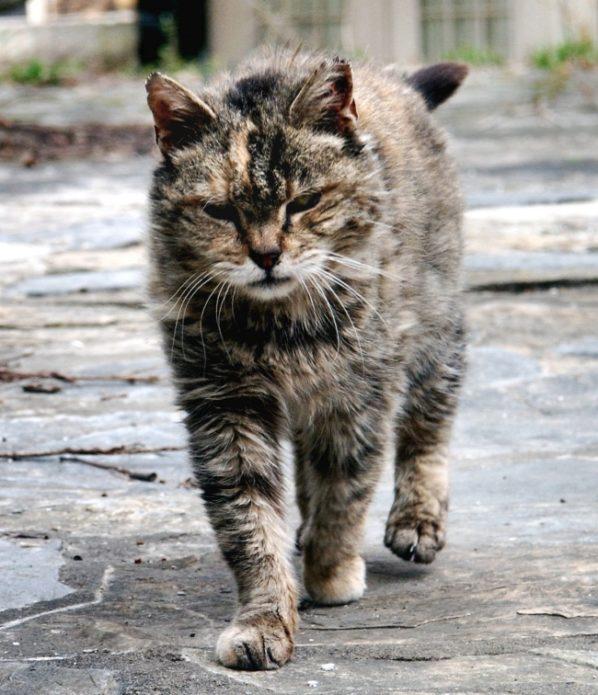 Брутальные уличные коты