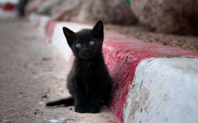 Чёрный котёнок на дороге