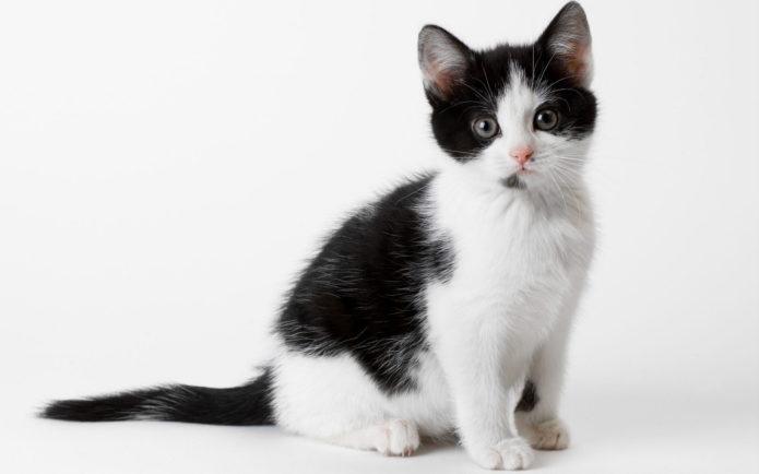 Чёрно-белый котёнок