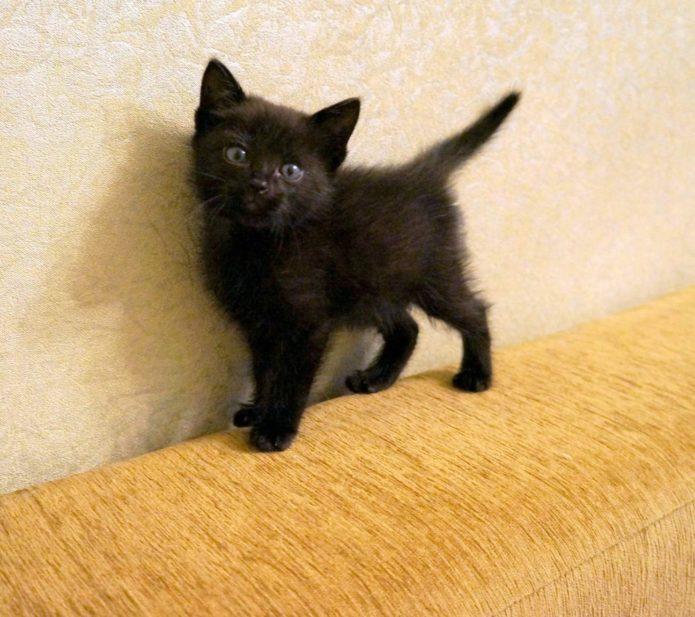 Чёрный котёнок на диване