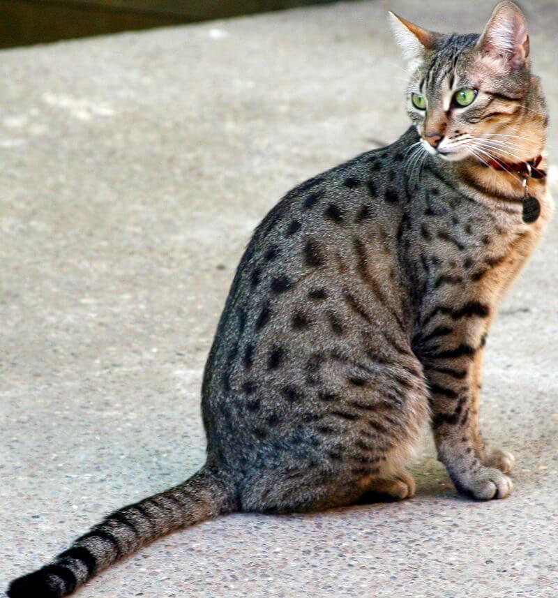 фото выпендрежной кошки растёт