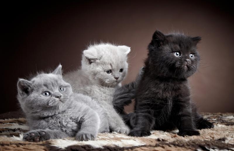 Котята разных пород