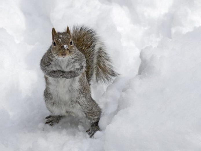 Фото белки в снегу