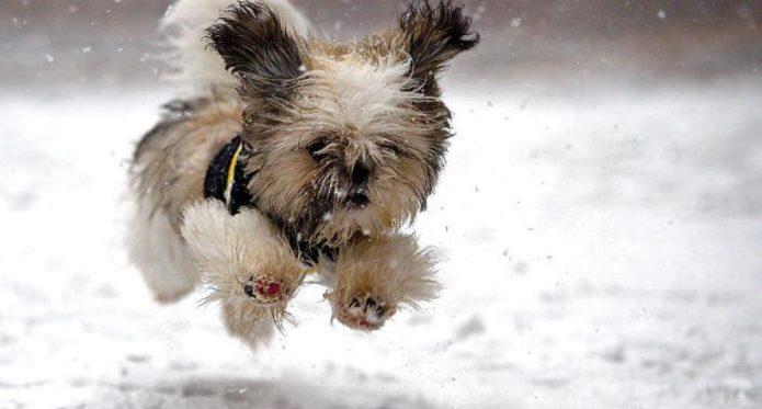 Собака несётся по снегу