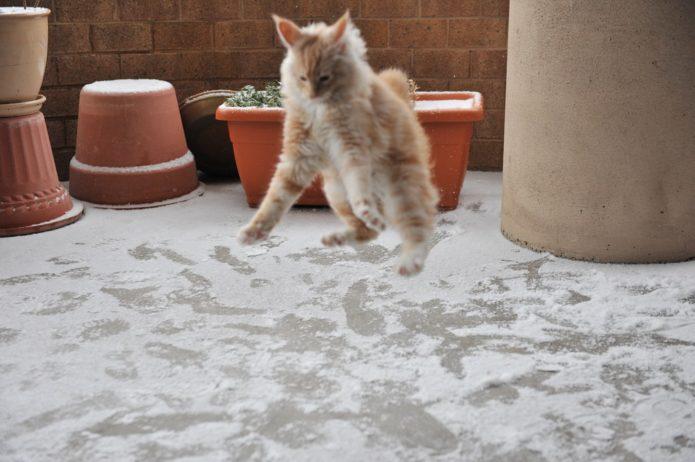 Кот подпрыгивает на снегу