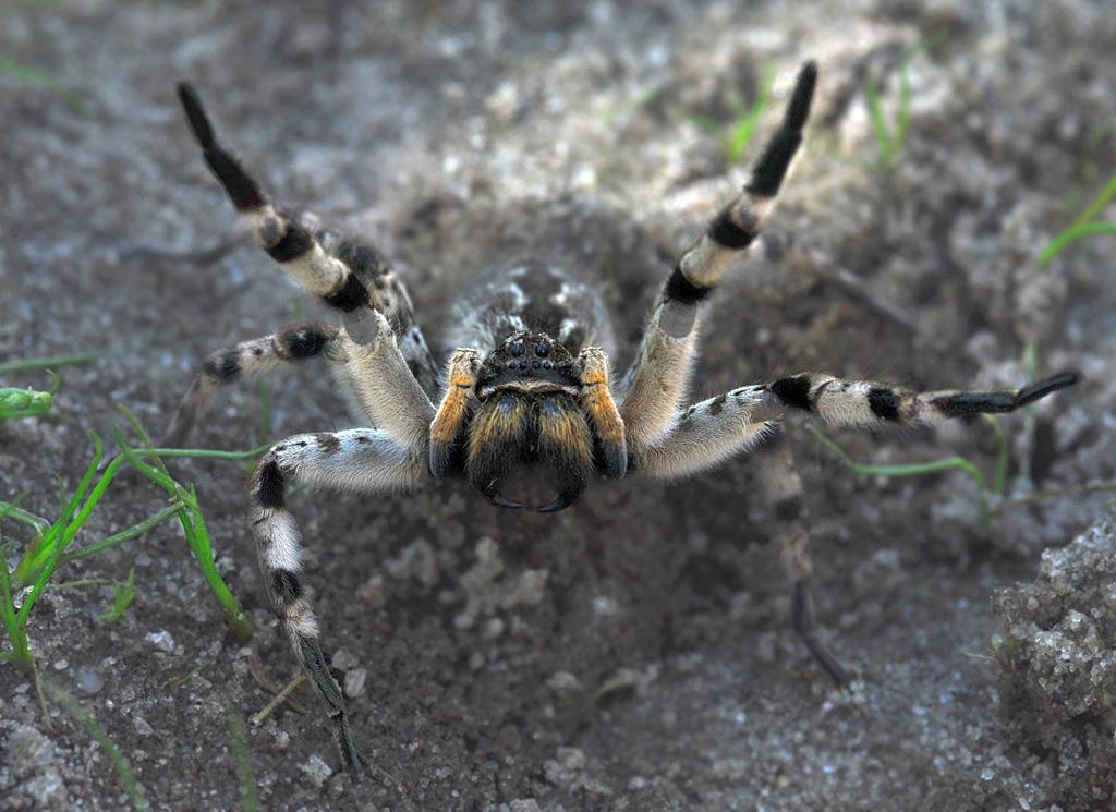 других старших тарантул ростовская область фото крепления кузова