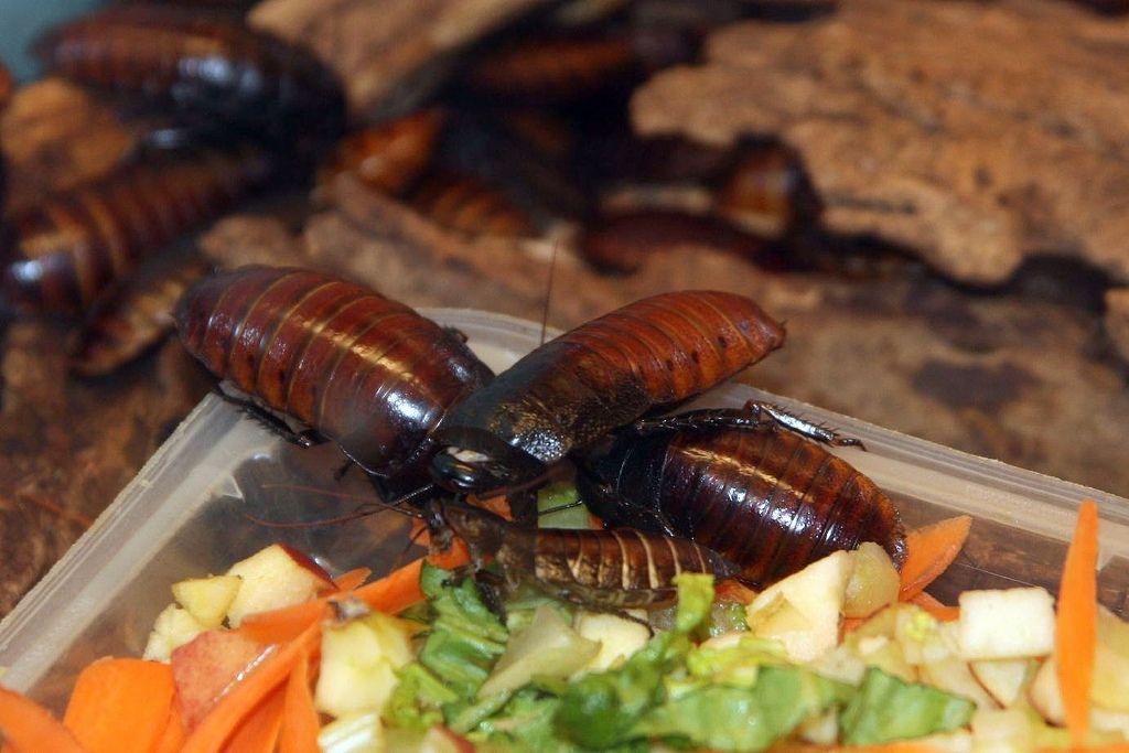 Едят тараканов картинка