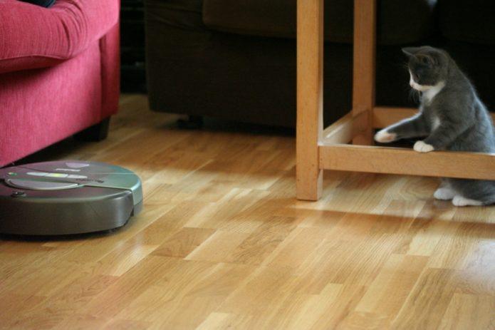 почему кошки боятся пылесоса