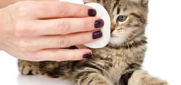 Уход за глазами кошки