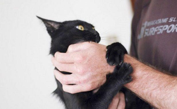 Кошка кусает руку человека