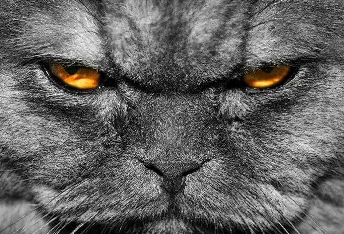 Кот злобно смотрит