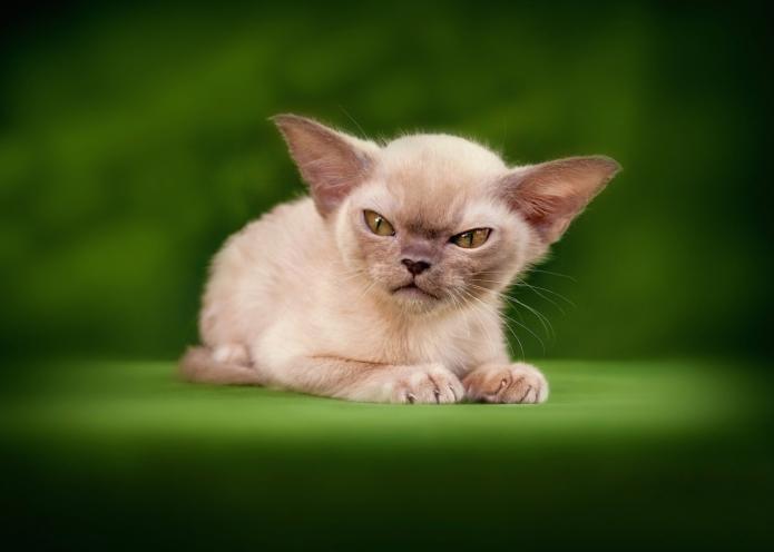 Котёнок на зелёном фоне