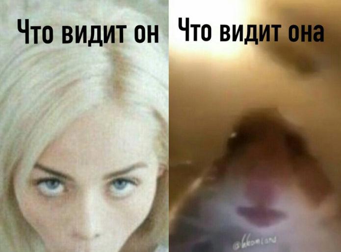 мемы про хомяков