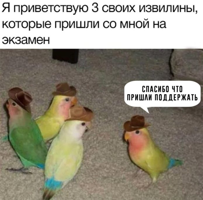 Мем с попугаями