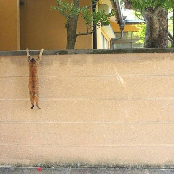 Кот завис на заборе