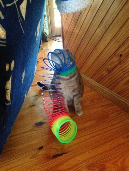 Домашний котёнок играет с пружинкой