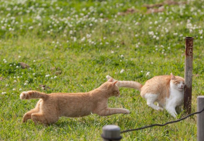 Коты и металлическая труба