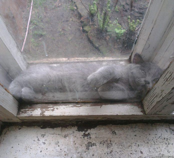Деревянная оконная рама и кот