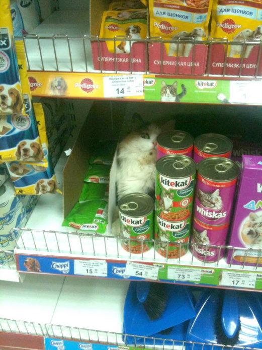 Кот на прилавке для корма