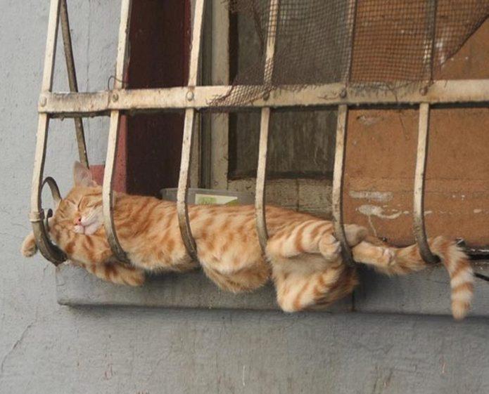 Решётка на окнах для кота