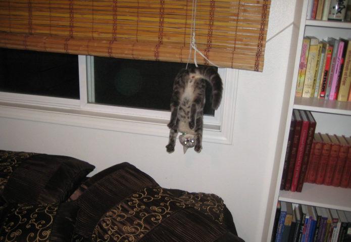 Кот завис на жалюзи